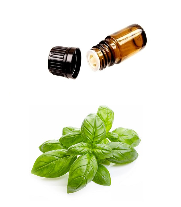 Pure SWEET Organic BASIL Essential Oil (Therapeutic Treatment) MY Natural Beauty essential oils are 100% pure and natural - Steam distilled from the leaves and flowering tops of the basil plant. Maintains health of hair & skin. Miami, Ft Lauderdale, Palm Beach, South Florida, Online