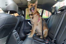 Load image into Gallery viewer, Dog Car Safety Seat Belt And Leash Combo