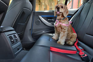 Dog Car Safety Seat Belt And Leash Combo