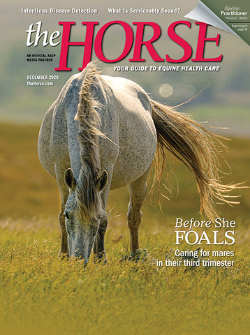 The Horse Subscription with December 2020 Issue PDF Download