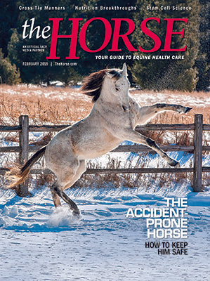 The Horse - February 2019 Issue
