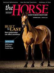 The Horse - November 2020 Issue