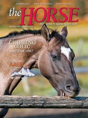 The Horse Subscription with November 2019 Issue PDF Download