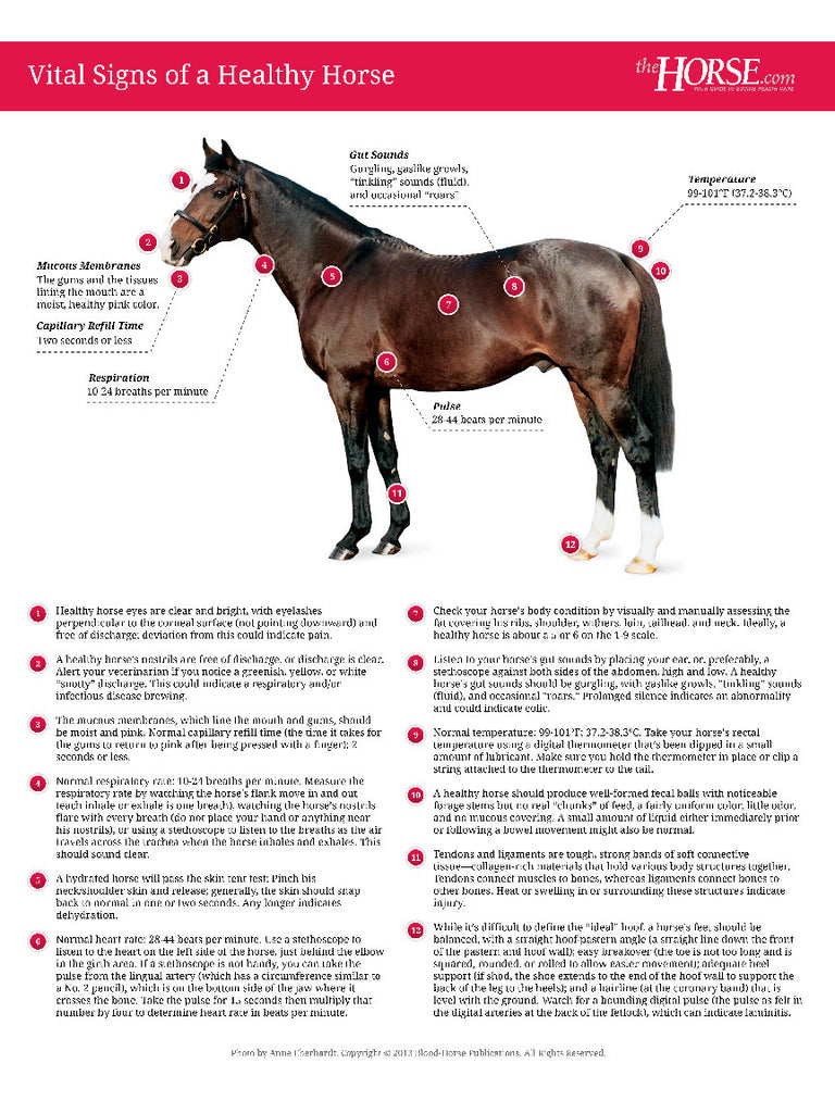 Vital Signs Of A Healthy Horse Poster The Horse Books