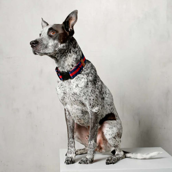 The City Dog Collar - Honore
