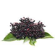 Black Elderberry Image