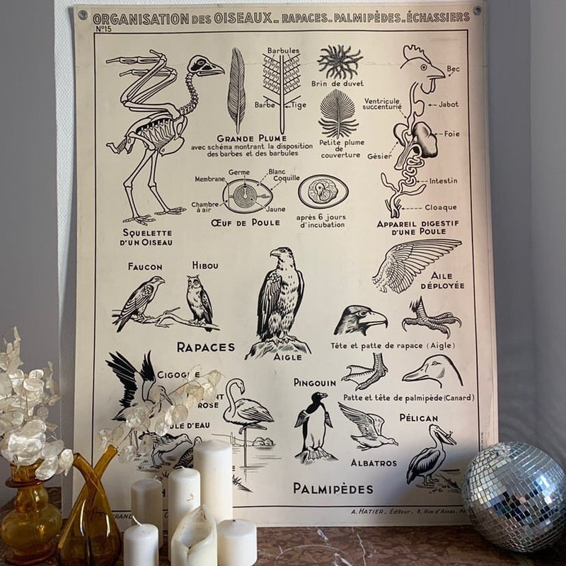 Bird Teaching Chart
