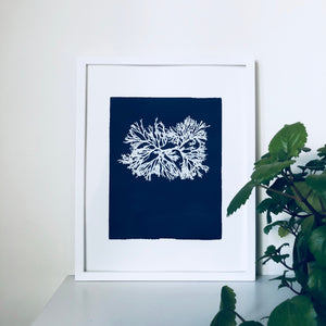 Hommage to Anna Atkins