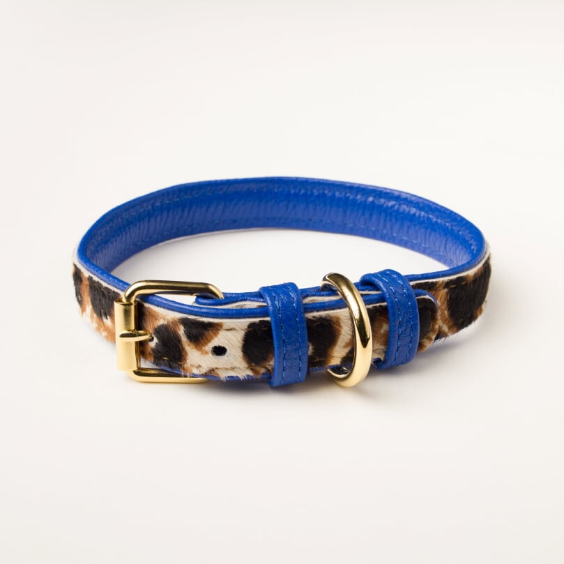 Willow Walks leather collar in leo and cobalt blue