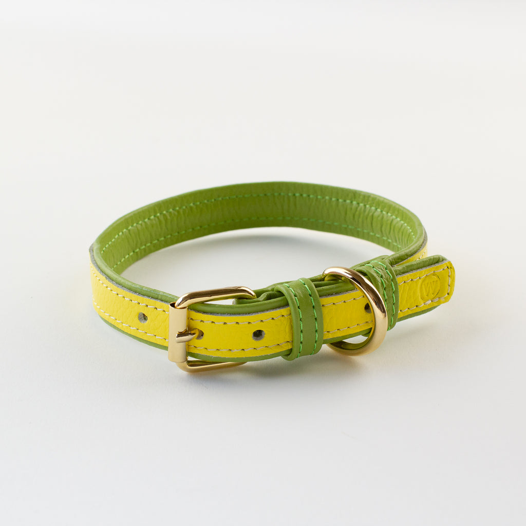 Yellow green leather collar Willow Walks