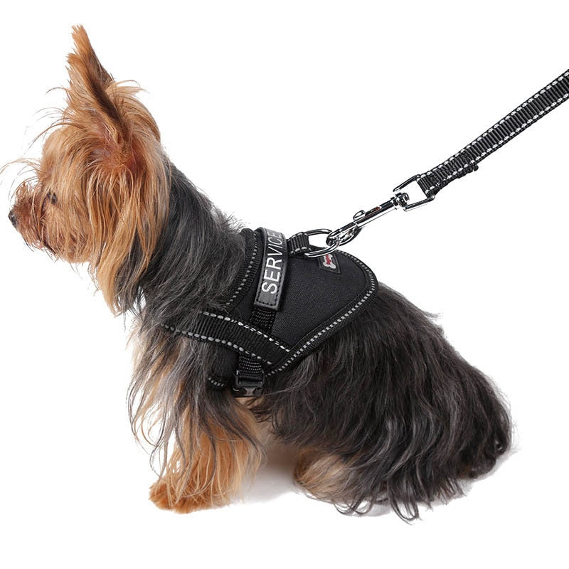 Harness for small Dogs