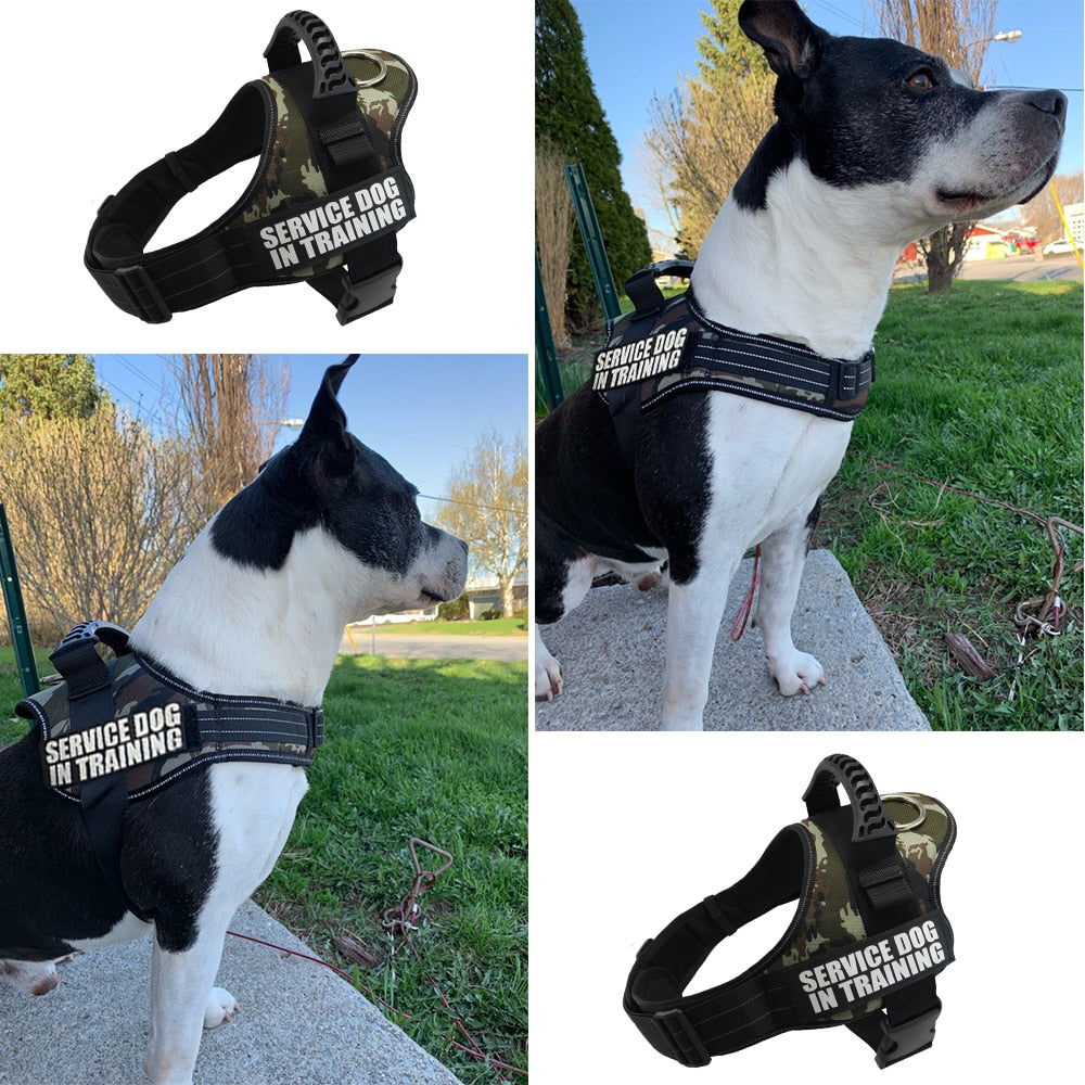 Dog Harness Service Dog in Training Vest