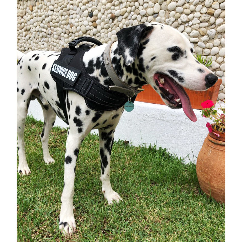 Dog Harness Service Dog Vest