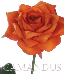 Rose Kerio orange