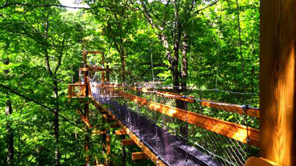 rainforest stain arboretum walking bridge