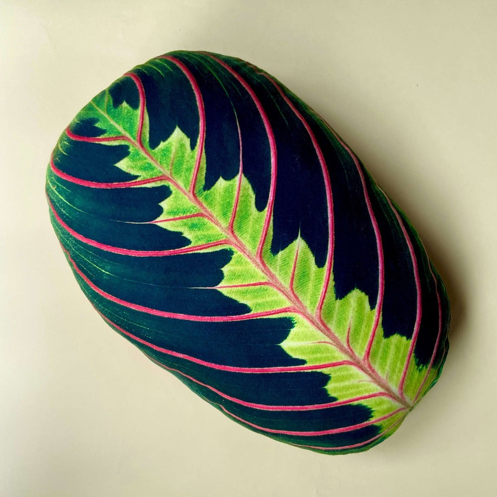 maranta pillow