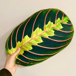 maranta leaf pillow