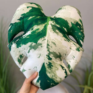 Variegated Monstera pillow