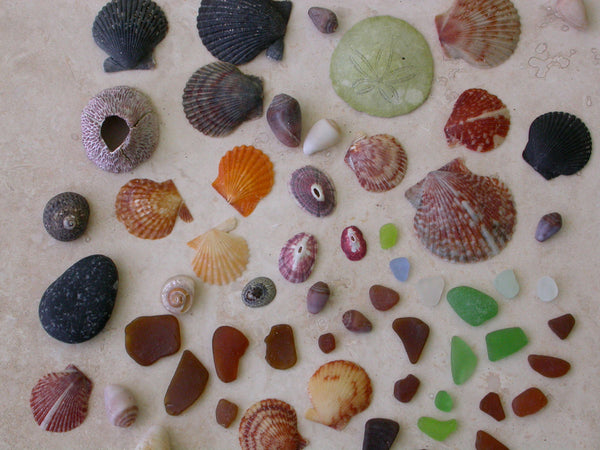 Sea glass, seashells and a sand dollar that we collected from beaches in California.