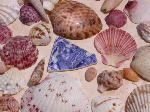 Sea pottery and seashells collected by Lisl Armstrong on beaches on the west coast of Florida.