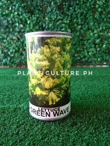 Condor Quality Seeds Lettuce Green Wave 22500 Minimum of Seeds by Plant Culture PH