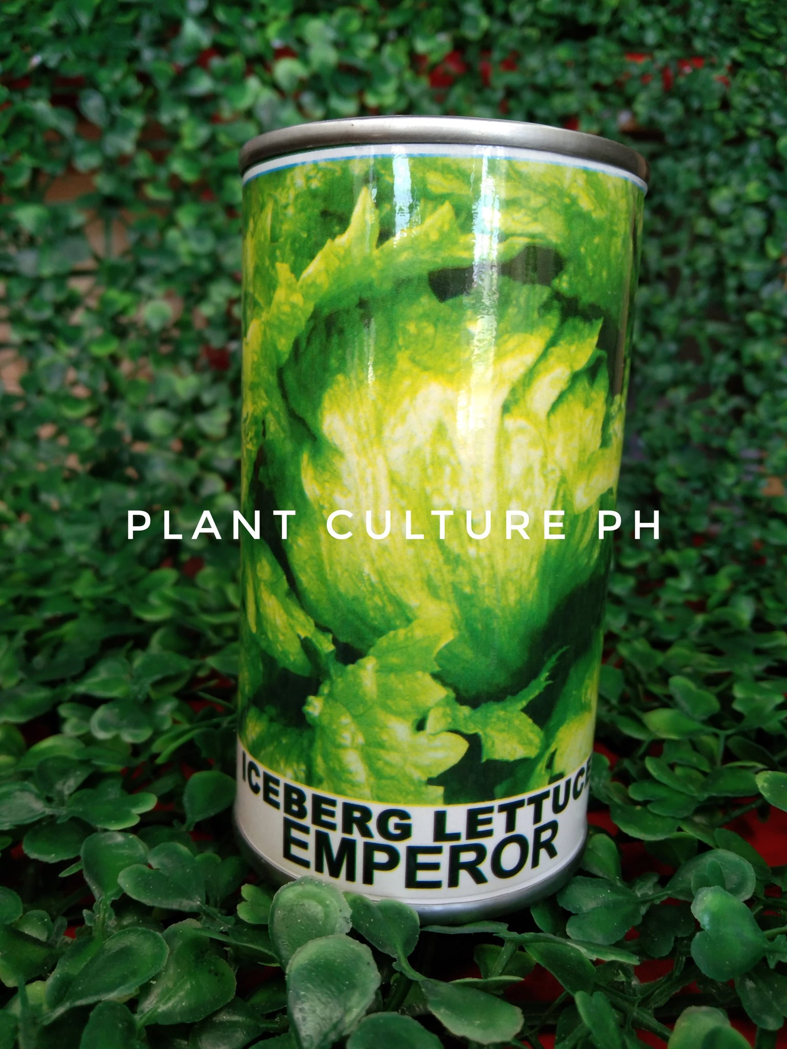 Condor Quality Seeds Iceberg Lettuce Emperor 5300 Minimum of Seeds by Plant Culture PH