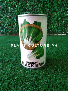 Condor Quality Seeds Pechay Black Behi 29800 Minimum of Seeds by Plant Culture PH