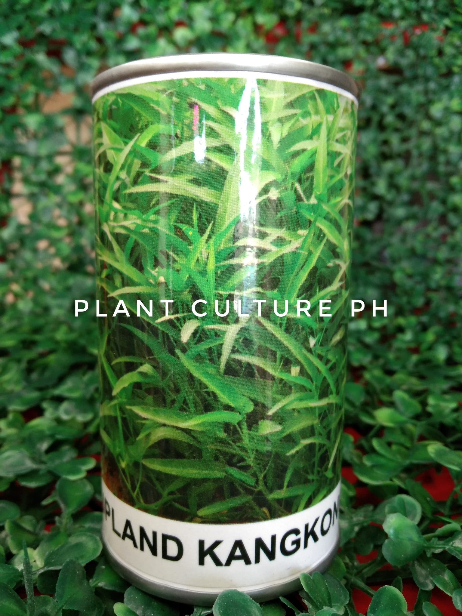 Condor Quality Seeds Upland Kangkong 1000 Minimum of Seeds by Plant Culture PH
