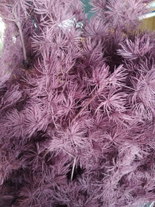 Dried Peng Lai Song Grape Purple