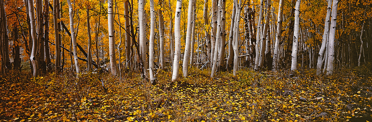 Aspens - Bear Mountains Utah