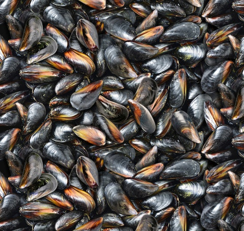 Food Festival - Mussels