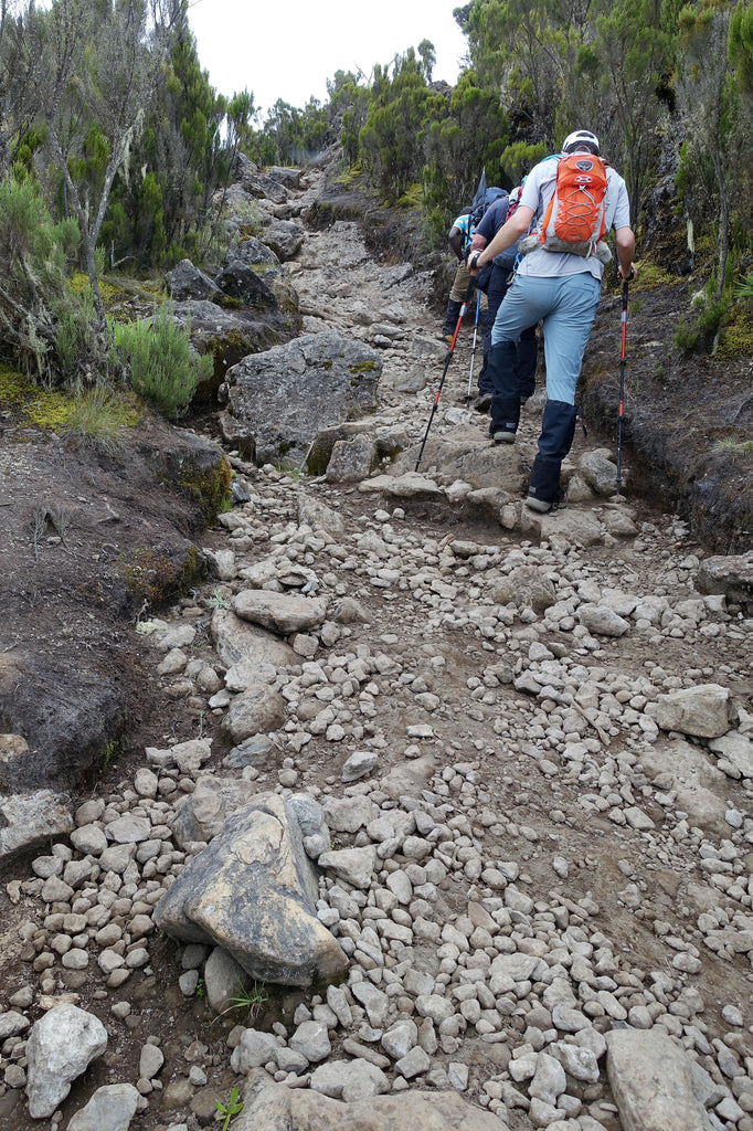 Hikers on a steep path in mooreland on Mount Kilimanjaro Machame Route