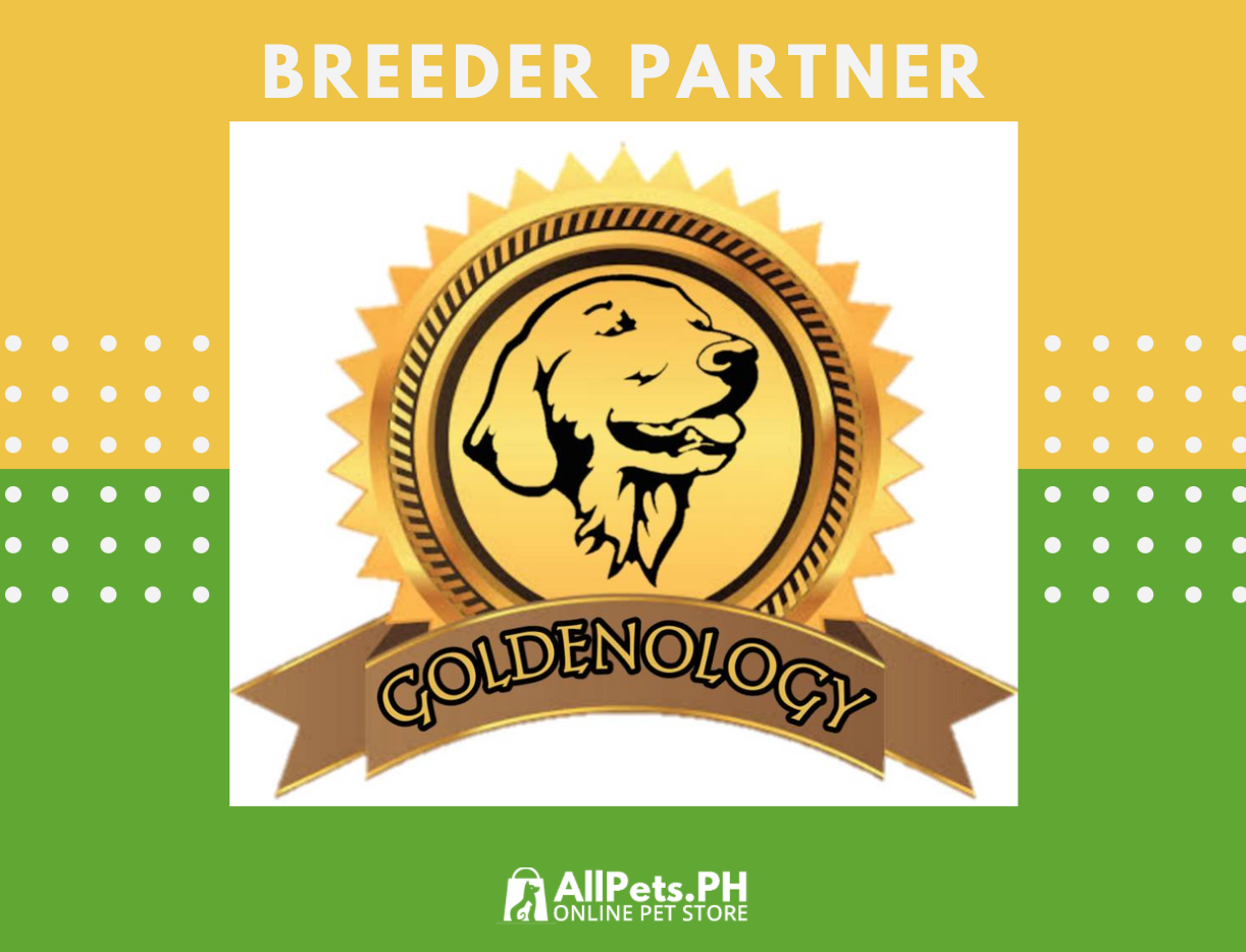 GOLDENOLOGY KENNEL