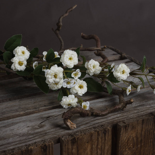 White Wild Meadow Rose