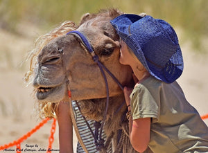 SPONSOR Lakes Entrance Camels (Feed for 2 Weeks)