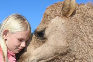 SPONSOR Lakes Entrance Camels (Feed For 1 Month)