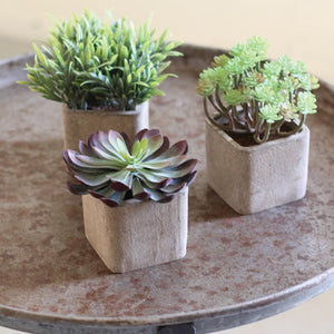Bring the beautiful of a tropical paradise inside your home with faux succulents. These succulents are perfect for desks, dining tables, coffee tables, or bookshelves & will certainly brighten someones day!  Dimensions:   Approximately- 3 x 3 x 6