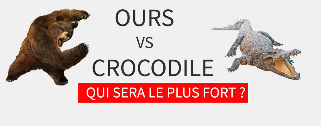 Ours vs Crocodile : Qui Gagne ?