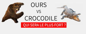 Ours vs Crocodile