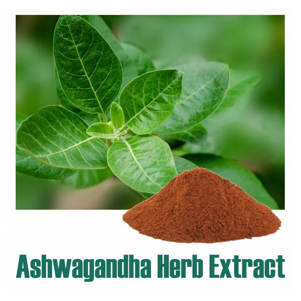 Ashwagandha (Withania somnifera) Dry Extract Herb - 2.5% Total Withanolides by HPLC