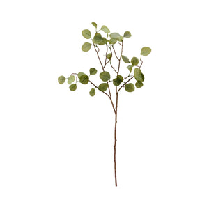 Branch, Eucalyptus, Nature, Pack of 2