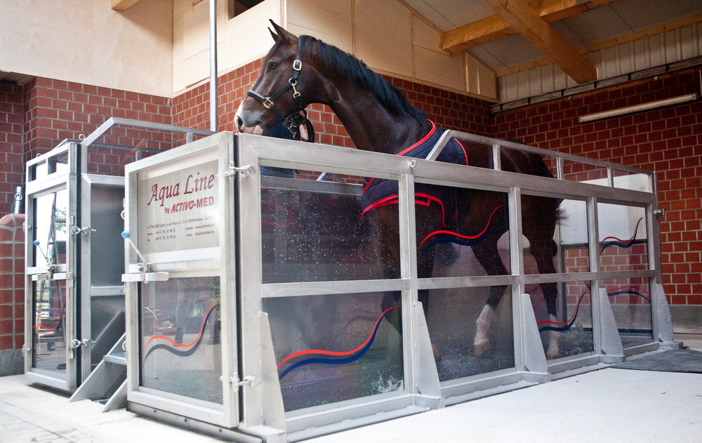 The 7 benefits of Aqua training for horses & a story from the field: