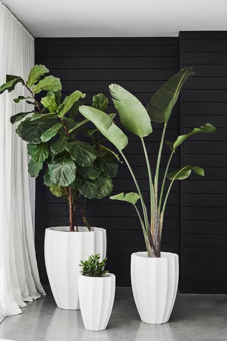 Vicky Yao Faux Plant - Huge Artificial Bird of Paradise Plant Arrangement (Only Melbourne)