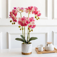 Load image into Gallery viewer, Vicky Yao Faux Floral - Exclusive Design Artificial  4 Stem Phalaenopsis Orchid Flowers Arrangement
