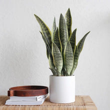 Load image into Gallery viewer, Vicky Yao Faux Plant - Exclusive Design Artificial Snake Plant in Pot