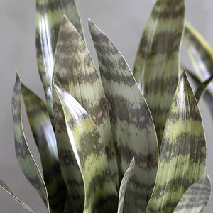 Vicky Yao Faux Plant - Exclusive Design Artificial Snake Plant in Pot