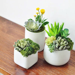 Vicky Yao Faux Plant - Exclusive Design Artificial Set Of 3 Mini Succulents Window Decoration
