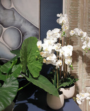 Load image into Gallery viewer, Vicky Yao Faux Floral - Real Touch Artificial Phalaenopsis Orchid Arrangement In White Pot