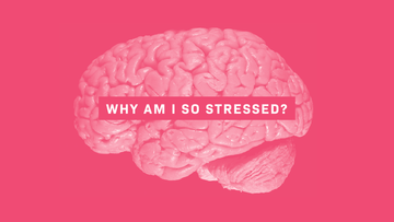 Brain Chemistry 101: Why am I so stressed?