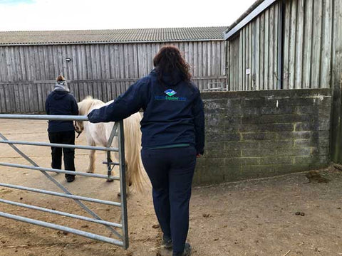 Equine veterinarian at Isle of Wight Donkey Sanctuary